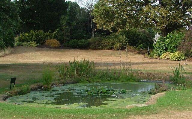 File:AS Pond.jpg