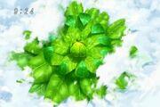 Ozo herb