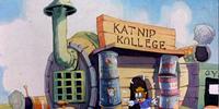 Katnip Kollege (location)