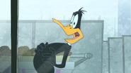 Working Duck (27)
