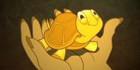Burmese Turtle