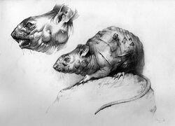 Mutant Rat Artwork