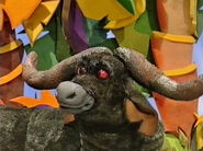 Travis the African Buffalo