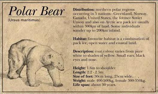 File:Bearpolar.jpg