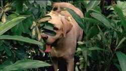 4x02 Good dog!.jpg