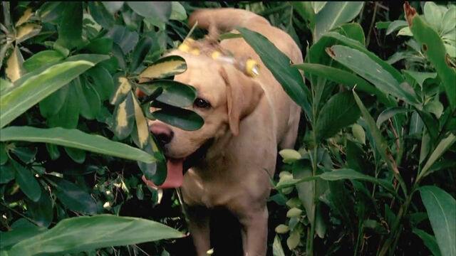 File:4x02 Good dog!.jpg