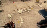 SkeletonPolarBear