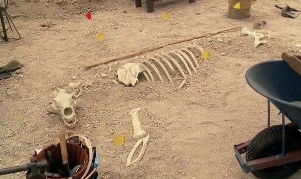 Ficheiro:SkeletonPolarBear.jpg