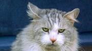 Nadia Cat m.jpg