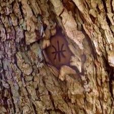 Ficheiro:Tree mark.jpg