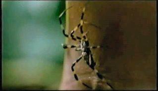 Archivo:Spider. Expose.jpg