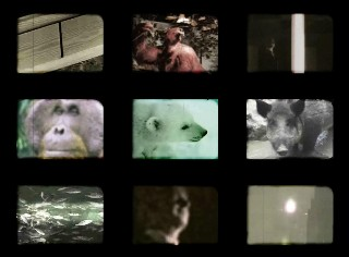 File:1980 orientation stills boar.JPG