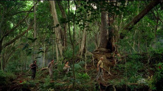 Ficheiro:Jungle walking.jpg