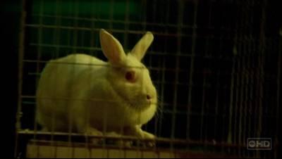 Ficheiro:BunnyFaceShot.jpg