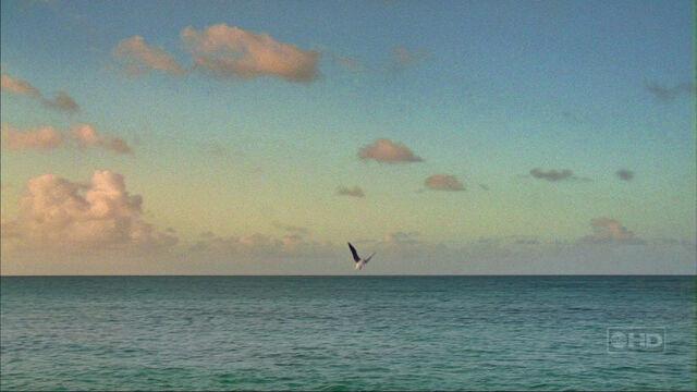 File:3X12 Seagull.jpg