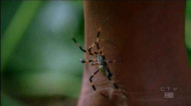 File:Spider bites nikki 3x14.JPG