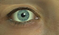 Elliot's eye