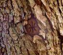 Marca del árbol