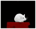 Thumbnail for version as of 17:14, November 23, 2005