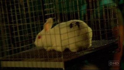 Ficheiro:Bunny.jpg