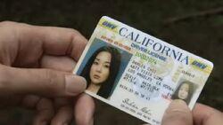 Sun driver license