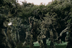 Many ents.png