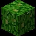 LeavesJungle
