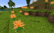 ChrysanthemumOrangeGroup