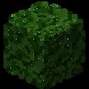 LeavesCedar