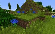 ChrysanthemumBlueGroup