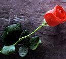 Love Never Dies Wiki