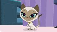 I am a siamese cat