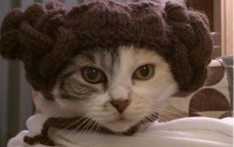 File:Star-Wars-Cat.jpg