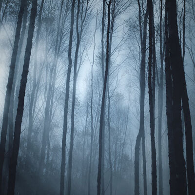 Laurelorn Forest