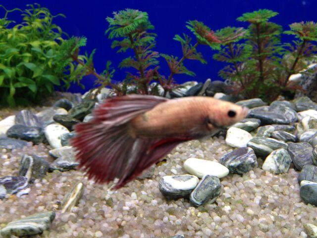 File:Fish 7.jpeg