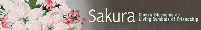 File:SakuraBanner.jpg