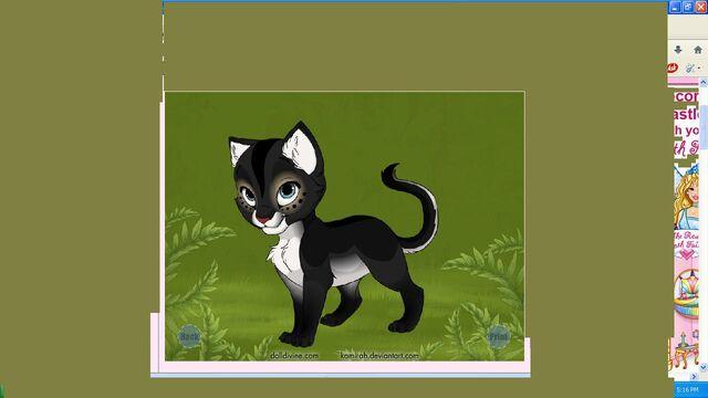 File:Nightwing as a kitten.jpg
