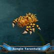 Jungle tarantula