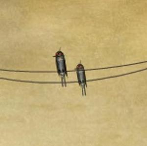 File:Birds on a wire.jpg