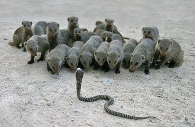 Mongoose 5