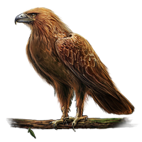 Huge item goldeneagle 01