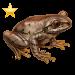 Item natalforestfrog gold 01