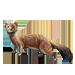 Item stoatally weasel 01
