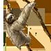 Item sloth 01