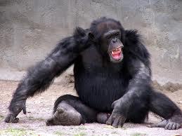 Angry Chimp Real