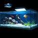 Item aquarium 01