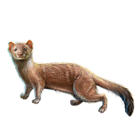 Huge item stoatally weasel 01