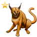 Item caracal gold 01