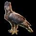 Item crownedeagle 01