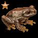 Item natalforestfrog bronze 01